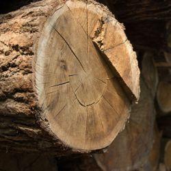 Endangered species of wood