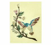 Jockomo AS Hummingbird Inlay Sticker